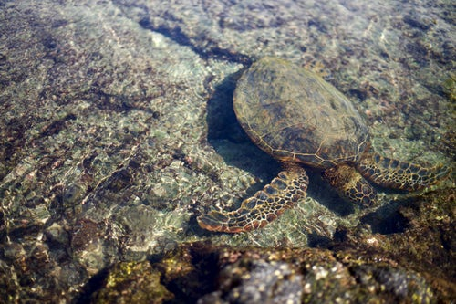 Sri Lankan Sea Turtles