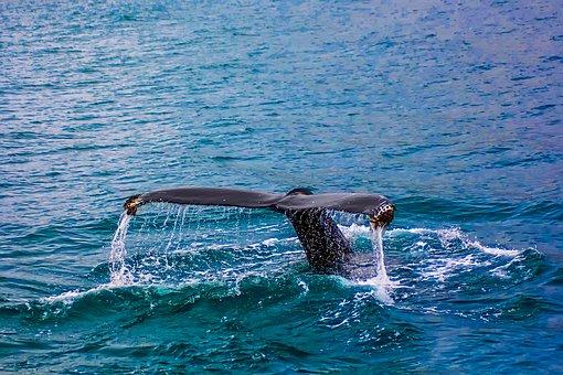 Whale watching in Mirissa – Villas in Sri Lanka